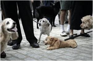 Sterilized Dogs Live Longer: Study