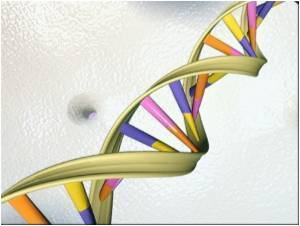 Gene Suspected in Diabetes Identified
