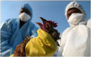 Risk of Avian Flu Could Be Pushed Up By Climate Change