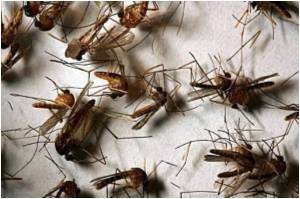 Malaria Remains a Major Threat, Say Experts