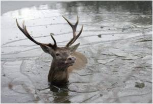 Prion Disease can Spread Through Faeces of Deer: Study