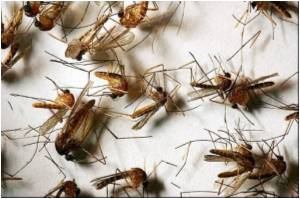 West Nile Virus Attacks Greece