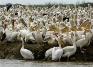 New Pan-African Bid to Combat Bird Flu Gets Funding Boost