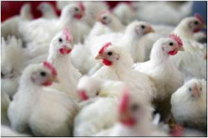Two Human Cases of Bird Flu Reported in China