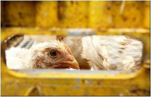 China Advises Calm After Death by Bird Flu