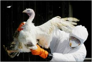 Bird Flu Outbreak Wipes 10 Billion Yuan in Business