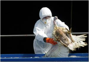 First Human Case of H7N9 Bird Flu Confirmed in Hong Kong