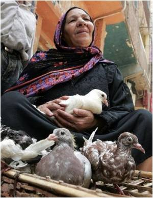 Bird Flu Kills Teenager in Egypt