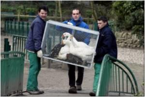 France Steps Up Vigilance After Bird Flu Outbreak