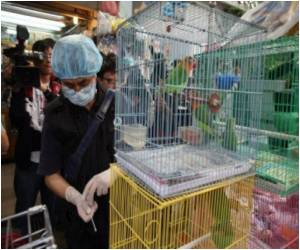 Dead Bird Tests Positive For Bird Flu In Hong Kong