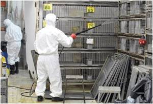 Live Poultry in Hong Kong Markets Culled After Bird Flu Outbreak