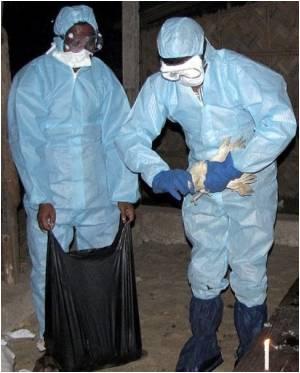 Bird Flu Re-surfaces in West Bengal