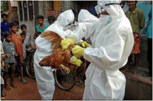 100,000 Birds Culled Due To Bird Flu in Bangladesh