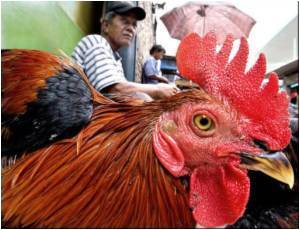 Indonesian Boy Dies of Bird Flu