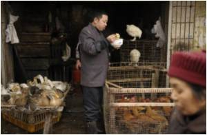 Bird Flu Samples Sent To WHO By Indonesia