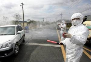 Massive Culling Couldn't Stop the Spread of Bird Flu in South Korea