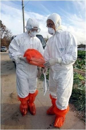 South Korea Doubles Bird Flu Drug Stockpile