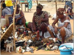 Bird Flu Found in Togo