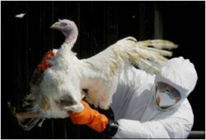 Bird Flu Risk Still Running High in Egypt, Indonesia, WHO Says