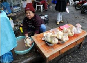 Vietnam on High Bird Flu Alert After Fresh Poultry Outbreaks