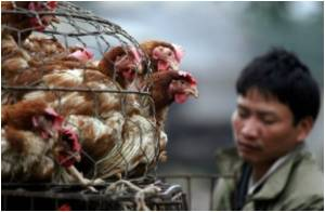 First H7N9 Bird Flu Case Outside China Confirmed By Taiwan