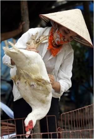 Vietnam Struggling To Combat New Cases Of Bird Flu
