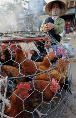 Vietnam Urged To Be Vigilant Against Bird Flu