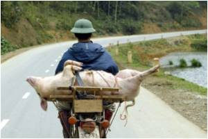 First Swine Flu Case Recorded In Vietnam