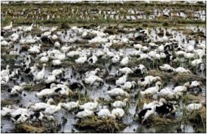 Vietnam Reissues Poultry Breeding Ban Amid Bird Flu Fears