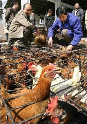 Bird Flu Outbreak Reported in China