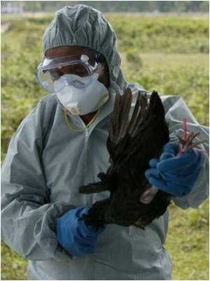 Glaxo Gets Nod from EU for Its Pre-pandemic Bird Flu Vaccine