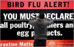Global Swine Flu Deaths Top 100