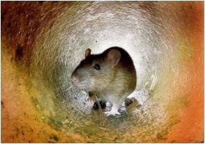Antidepressant Stunts Brain Development in Rats