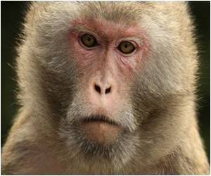 Brain Electrodes in Rhesus Monkeys A Major Step in Paralysis Research