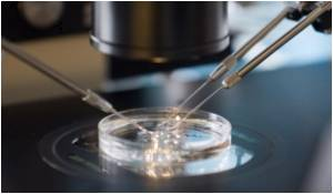 IVF Success Chances Could be Doubled by Filming Embryos