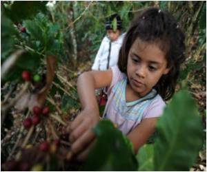 Child Workers Bring in Honduran Coffee Harvest