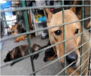 In High Rise Hong Kong, Pets Suffer