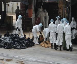 Bird Flu Battle Heats Up With 17,000 Chickens Culled in Hong Kong