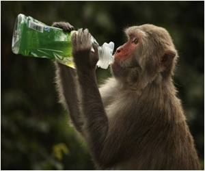 Social Networking Monkeys More Popular in Their Groups