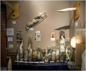 Size is Everything At Iceland's Phallological Museum