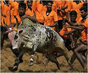 Bullfighting Banned in India: Environment Ministry