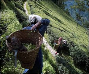 Sixteen Die Due to Cholera in Indian Tea Plantations