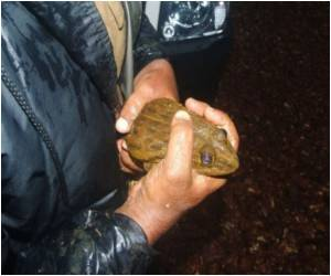 Goa's Frog Poachers Cash in on the 'Jumping Chicken'