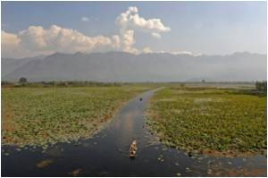 J&K Lakes, Including Dal, on the Verge of Extinction Thanks to Pollution