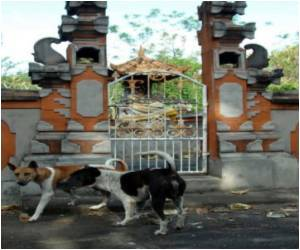 Bali to Vaccinate Dogs to Combat Rabies Epidemic