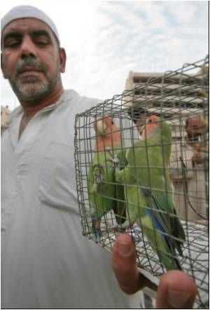 Baghdadis Flock to the Birds to Ease Their Loneliness
