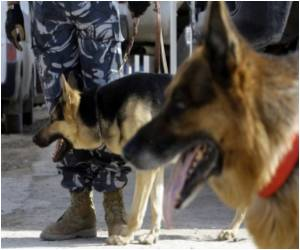 Amid Iraq Bomb Threats, Dogs Sniff Out Explosives