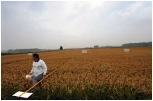 Contributing to 29 Pc of Global Greenhouse Gas Emissions is Agricultural Production
