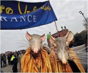 Venice Residents Protest Against City's Conversion into a 'Theme Park'