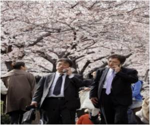 Japanese Mobile Ringtone 'Cures Hayfever'